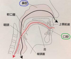 鼻腔と口腔